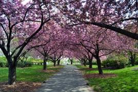 Brooklyn Botanic Garden *
